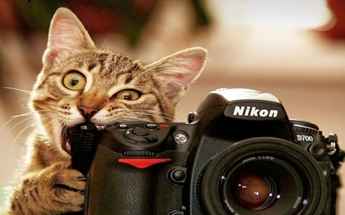 funny-cat-anima-biting-camera-nikon-hd-wallpaper-1920x1200