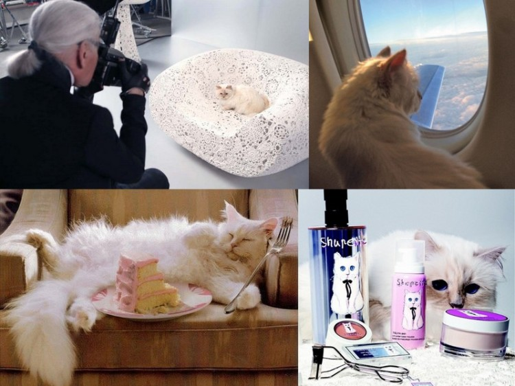 Yep, that's right. Choupette even has her own limited edition cosmetics line via Shu Uemera.